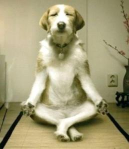 funny-yoga-dog
